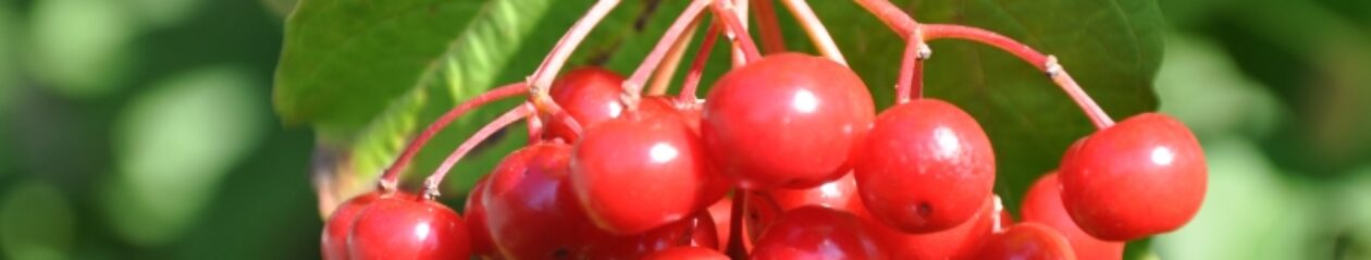 ПермакультУРА — стратегия личной продовольственной безопасности